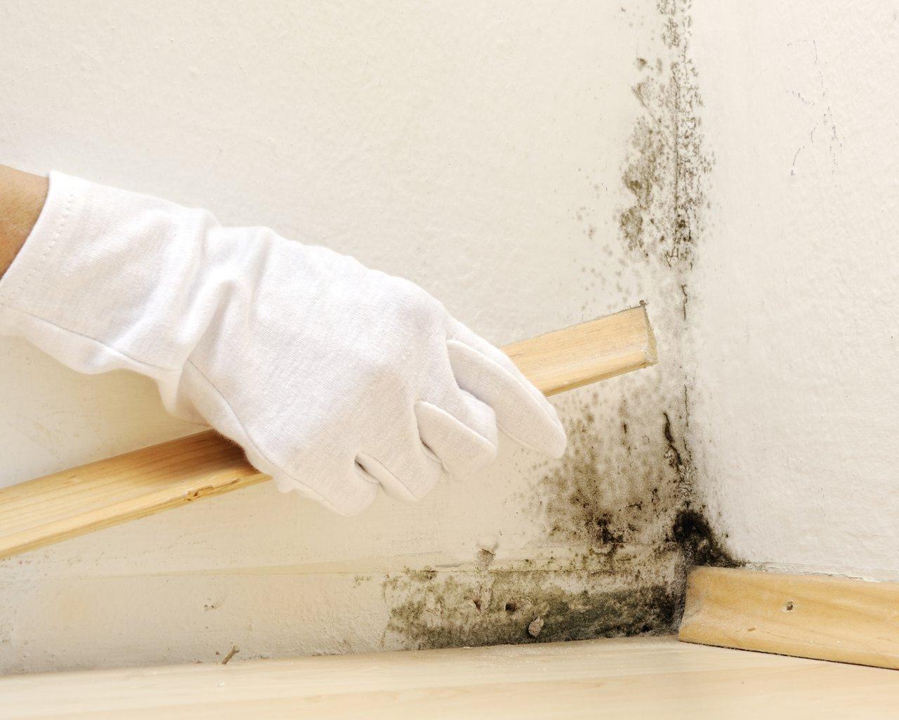 Schimmel im Haus – richtig lüften reicht häufig nicht aus ...